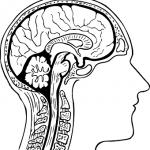 ¿Qué es la esclerosis múltiple? Las claves para entender la enfermedad que padece María Pombo